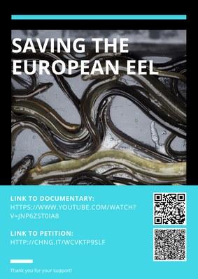 Saving the European Eel